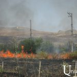 Fields, fruit-trees, and non-fruit-trees burnt in Tavush